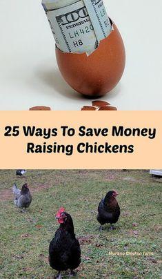 25 Ways to save money raising chickens