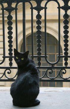 Black cat on balcony