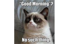 35. Good Morning?