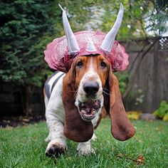 scientists now believe that the modern day basset hound is actually a descendent of the tricera-dean who is said to have napped through the ice age. #howloween