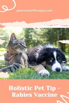 Myth: 3 Year Rabies vaccine is much stronger than a 1 year Rabies vaccine Truth: The vaccines are identical. Healthy Pets, Dog Quotes, Pet Beds, Dog Accessories, Dog Grooming, Pet Care, Pet Supplies, Dog Lovers, Dog Cat