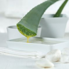 Aloe vera juice is the latest health and beauty craze and it's easy to see why.