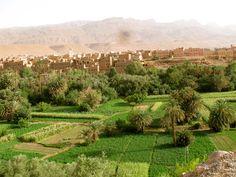 Cuando ves un verdadero oasis florecer en pleno desierto, te quedas sin palabras...