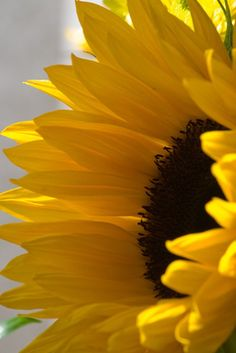 How to make a tissue paper sunflower