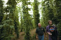 Towers of hops, make your own beer.  This could also go in the wedding folder!