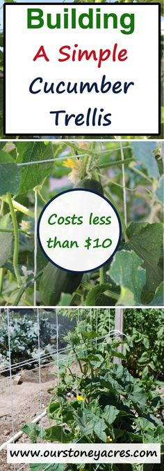 Building a simple cucumber trellis for your garden will help the production of your cucumber plants.  This plan uses easy to find lumber and will cost you less than $10 to build!
