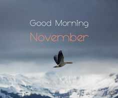 When the of the month has arrived, share a warm morning pic with the ones you love and care about and welcome a lovely new month. Welcome November, Hello November, Good Morning Winter, New Month, Beautiful Gif, Monat, Months In A Year, Good Morning Quotes, Holidays And Events