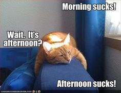 Hahahaha this is how I feel on my day off.