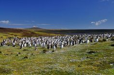 Tourist routes in the Falkland Islands  For example, king penguins and dolphins can be seen year-round Folklendskitei Islands, black albatross from September to May, sea lions from December to March, and more.