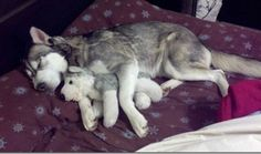 Pets with their stuffed animal clones