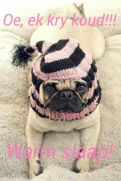 Dog Hat Custom Stocking Cap by jessicalynneart on Etsy, so cute, love pugs! Cute Pugs, Cute Puppies, Dogs And Puppies, Pug Love, I Love Dogs, Raza Pug, Amor Pug, Sweet Dogs, Pugs And Kisses