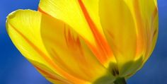 The Mental Health Benefits Of Flowers