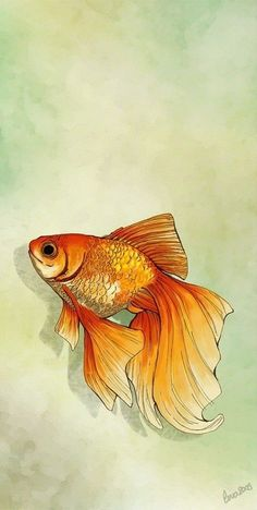 Ideas Tattoo Watercolor Fish Goldfish The Effective Pictures We Offer You About tattoo w Watercolor Fish, Watercolor Animals, Watercolor Paintings, Tattoo Watercolor, Fish Paintings, Art And Illustration, Fish Drawings, Art Drawings, Koi Fish Drawing