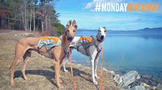 #MondayGiveaway It's Walk The Dog Day! Like our page and enter our #contest for a #prize! - https://www.facebook.com/EntirelyPets/