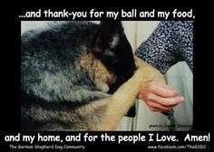 the dogs prayer...say your prayers Wally! ;) and from rescuing you from WalMart