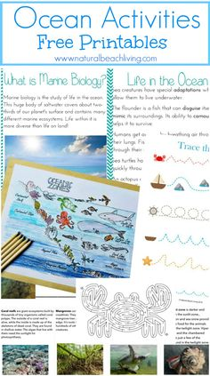 The Best Ocean Unit Study for Kids, Homeschool education, Marine Biology for…