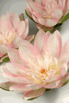 12 floating white lotus flowers with rain drops 7 white lotus 12 pink floating water lily flowers mightylinksfo Images
