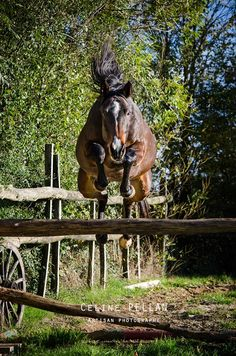 THE JUMP - horse. Flying right over that fence. Awesome photo shot capture!
