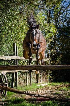 THE JUMP - horse