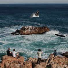 Whale Watching, Hermanus, South Africa BelAfrique your personal travel planner - www.BelAfrique.com