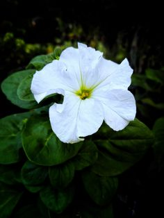 Mobile Photography, Plant Leaves, Plants, Plant, Planets