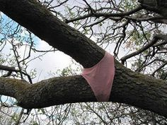 This tree wearing pants: | 25 Photos That'll Make You More Uncomfortable Than They Should