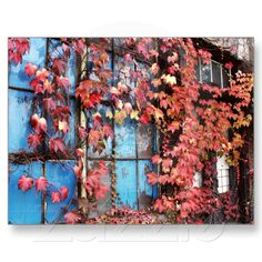 Rustic Autumn Vines Against An Old Building