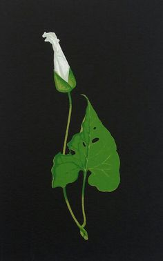 Limited edition screenprint Bindweed by contemporary British printmaker Martin Grover. Borders For Paper, Ikebana, Paper Size, Printmaking, Screen Printing, Plant Leaves, Colour, Green, Artwork