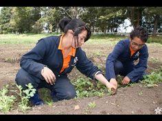 Importancia de la Formación Para el Sector Agropecuario - TvAgro por Jua...