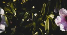 Cover Photos, Plant Leaves, Dark, Nature, Flowers, Plants, Photography, Color, Naturaleza