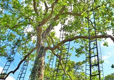 Francois Mechain has created an installation, entitled 'L'arbre aux echelles'. Translating to 'ladders tree', Francois installation looks like something out of a dream and was on display from 2009-11 at the Chateau de Chaumont-sur-Loire in Nice, France.