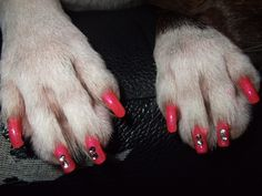Doggie nail art gets tongues wagging · cbccommunity · Storify