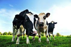 Au Canada, les animaux sont désormais des « êtres sentients », et n'appartiennent plus à PERSONNE.