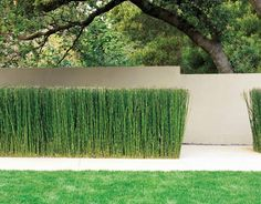 great fence and planting