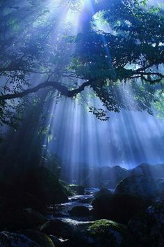 Beautiful sunlight in a forest in Japan.