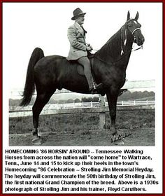 Strolling Jim-- 1939 WGC Tennessee Walking Horse... the first World Grand Champion