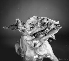 High-Speed Photos Of Wet Dogs Shaking Their Heads Published In Book