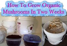 The Process for growing mushrooms is very easy. But it all depends on the type of mushroom you are thinking of growing.  With this tutorial it will show you a #mushroomgrowing