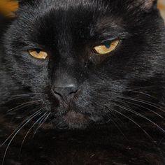 Marx Cat | Pawshake