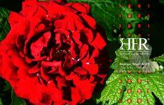 #Viladerei #Dornes #Outdoor #Nature #Sertã #CenterPortugal #Ferreiradozezere #PenedoFurado #Castelodobode #Hotel #Luxe #Portugal #Vakantie #Ferien #Urlaub #Holiday #Resort #SPA #Boutique #Tomar #HFRresort #Herdadefozdarepresa #Ferias #Golegã #Lisboa #Porto #Abrantes #Cabecinha #Roses