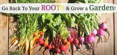 Are Vegetables that Take a 100+Days to Mature Worth Growing? | Little Mountain Haven