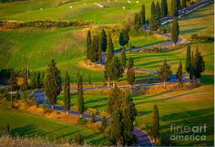 Rural road near the Tuscan town of Pienza, Italy. Photo by Inge Johnsson