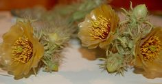 Glass Flowers: Yellow Cactus Blooms
