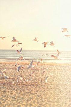 Fly to your dreams... Bütün çabam Hayallerimizin büyüsü asla bozulmasın üzerine...