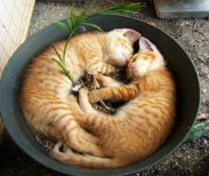 Two cats in a pan must mean the same as Two peas in a pod...right?