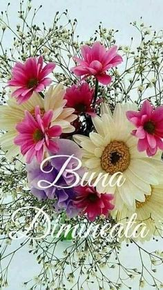 Enjoy World Fragrance of Flowers Amazing Flowers, Beautiful Roses, Pretty Flowers, Colorful Flowers, Bulb Flowers, Flowers Nature, Birthday Wishes Flowers, Amaryllis Bulbs, Good Morning Flowers