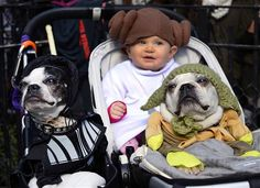 "Dogs and baby dressed as characters from ""Star Wars"" attend the 23rd Annual Tompkins Square Halloween Dog Parade on October 26, 2013 in New ..."