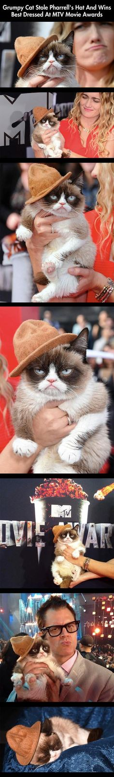 """And would you believe that this cat was the inspiration for Pharrell's phenomenal hit """"Happy""""? I didn't think so."""