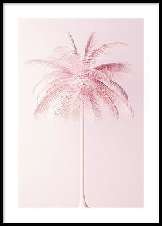 Pastel Pink Palm Poster in the group Prints / Floral at Desenio AB Pink Paris, Poster 70x100, Poster Shop, Gold Poster, Personalised Posters, Wall Art Prints, Poster Prints, Pink Wall Art, Art Posters