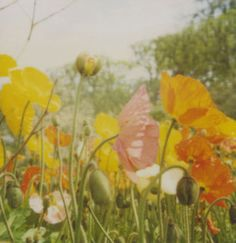 """Saatchi Art is pleased to offer the photograph, """"Eden - Limited Edition number 3 of by Fernanda Montoro. Original Photography: Color, Polaroid on Paper. Art Prints Online, Online Art, Photography For Sale, Fine Art Photography, Icelandic Poppies, Mellow Yellow, Beautiful Gardens, House Beautiful, Beautiful Things"""